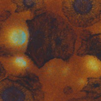 venta de esmalte para cerámica amaco crystaltex Ctl-35 nutmeg baja temperatura
